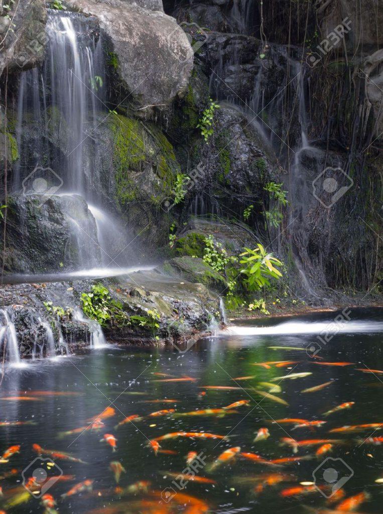 Thác nước, hồ cá